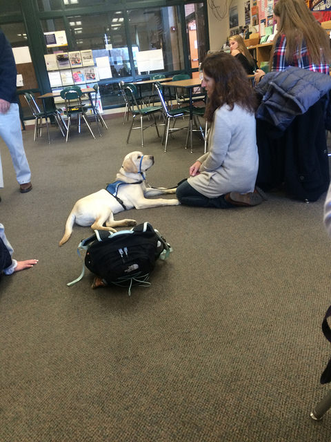 Volunteer Liz Burke brings her therapy dog to the Hopkinton High School's guidance office for De-stress week. Photo by Alli McNulty.