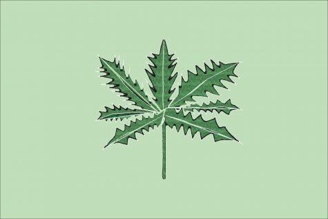 Main Graphic for Marijuana Article