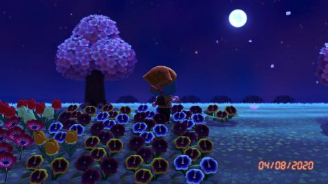 Photo: Animal Crossing