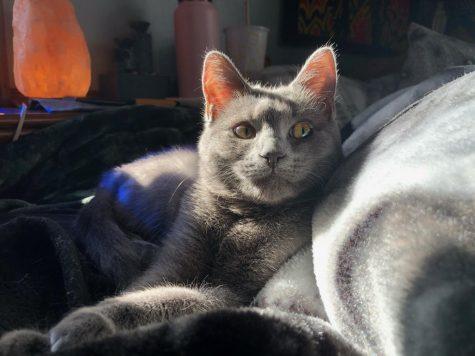 Jess-covid-cat